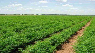 """Photo of """"الزراعة"""" تطلق تطبيقاً عبر """"المحمول"""" للانذار المناخي المبكر وتوعية الصعايدة"""